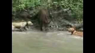 Caçadores Selvagens