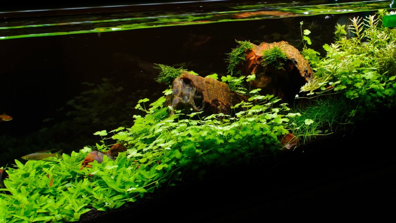 Planted aquarium time lapse youtube for Google fish tank mrdoob