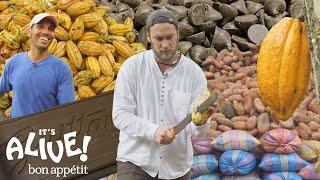 Brad Makes Chocolate in Ecuador: Part 1   It's Alive   Bon Appétit