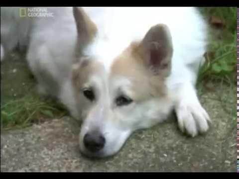 Znalec psej duše - Molly, Jane a Genoa