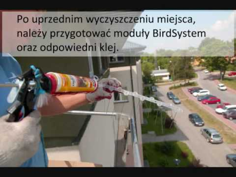 Montaż modułów mechanicznych BirdSystem na gołębie