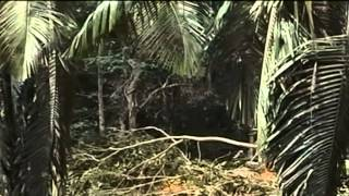 Tangisan Cucu Cicit Cik Siti Wan Kembang (Bahasa Melayu) view on youtube.com tube online.