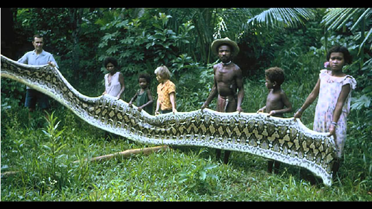 BIGGEST SNAKE IN THE WORLD!!! - YouTube
