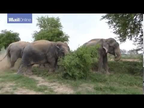 الفيل الذي أبكت قصته الملايين بعد أن درف دموع الحرية