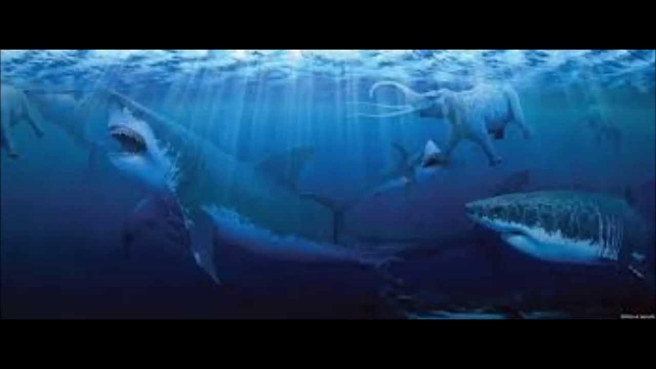 Megalodon Shark Still Alive