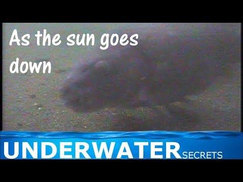 Ostražitosť kaprov - night underwater carp
