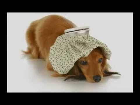 How Do You Cure Kennel Cough In A Dog