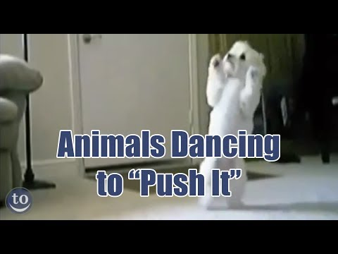 Animals Dancing to Salt-n-Pepa's 'Push It'