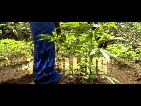 JNN SPECIAL FEATURE: MARIJUANA, MEDICINE & MONEY [HD]