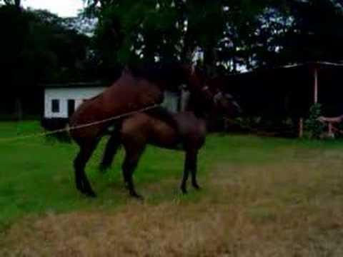 Horse mating 3 - YouTube