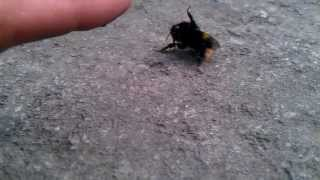 High 5 the Bumble bee, he so wanted it.