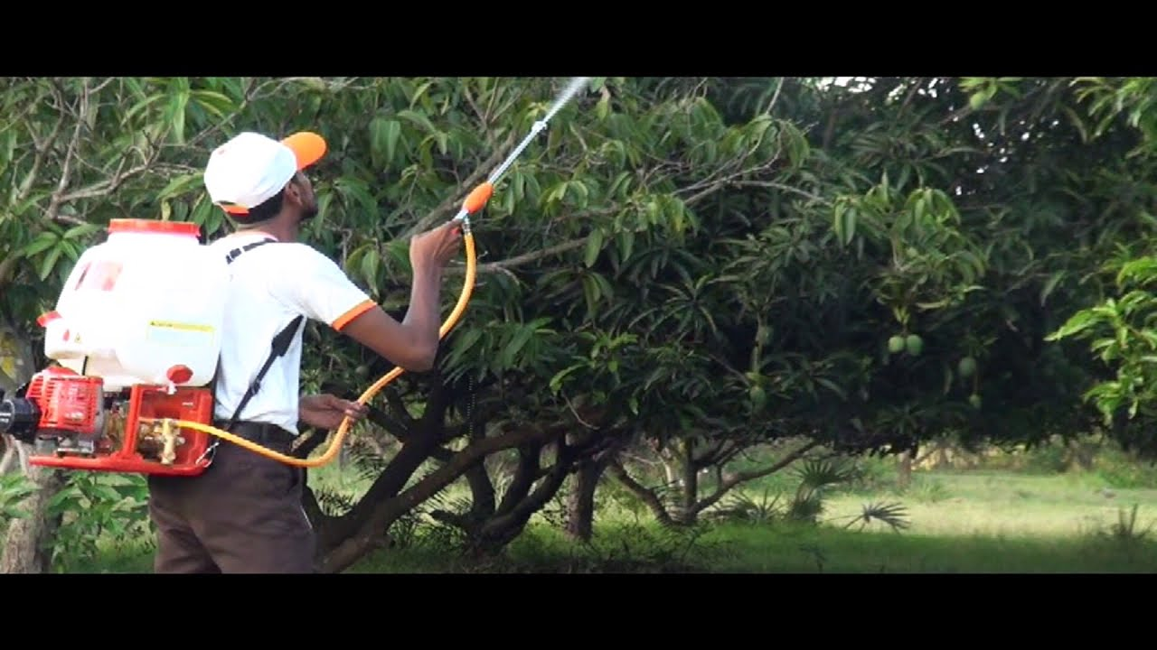 Maax Knapsack Power Sprayer For High Trees Youtube
