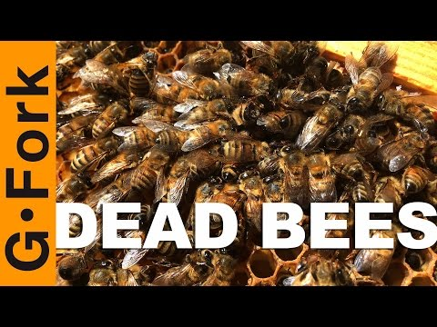 My Bees Are Dead, Here's Why - Beekeeping 101 - GardenFork