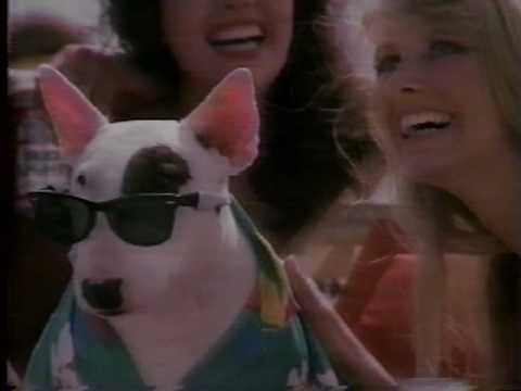 Spuds McKenzie Bud Light with bikini girls on the beach 1987 KB3M 33043 ...
