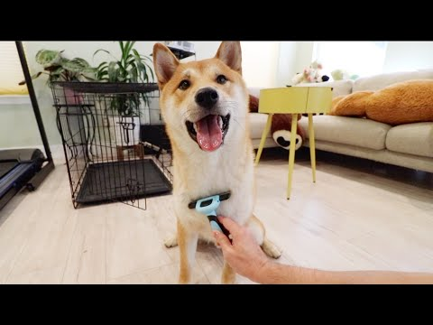 first time grooming my dog