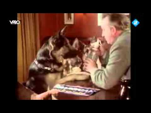 Thumbnail image for 'Three German Shepherds walk into an English Pub (actual video)'