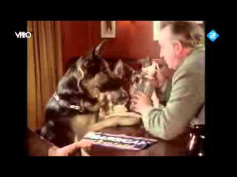 Thumbnail image for 'Three German Shepherds walk into an English Pub (actual video)'