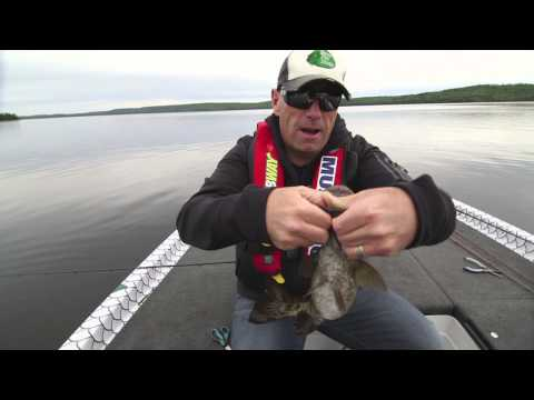 Targeting Surfacing Smallmouth with a Livetarget Popper Frog - Facts of Fishing THE SHOW