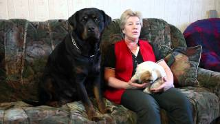 Видео - Чем кормить собаку Говорит ЭКСПЕРТ Сухой корм?