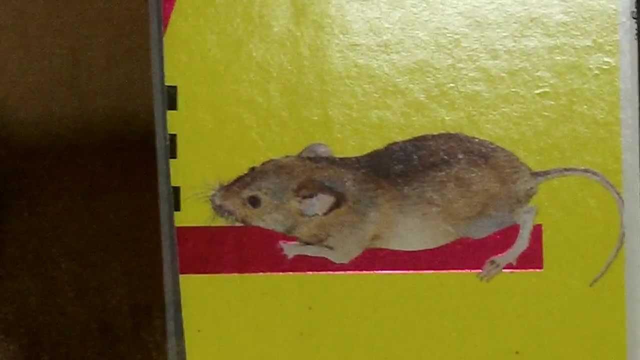 Rodent Block Garage Door Seal Pest Proof Bottom Seal Youtube