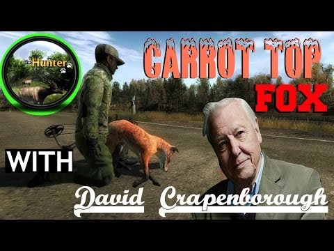 CARROT TOP FOX - DAVID ATTENBOROUGH COMMENTARY - The hunter 2014