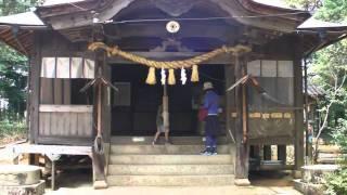 Tanuki Racoon Dog in Kumano Shrine Park view on youtube.com tube online.