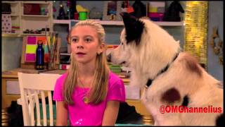 Avery From Dog with a Blog