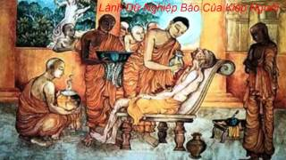 Gieo Gió Gặt Bão_Truyện Phật Giáo Hay Nhất