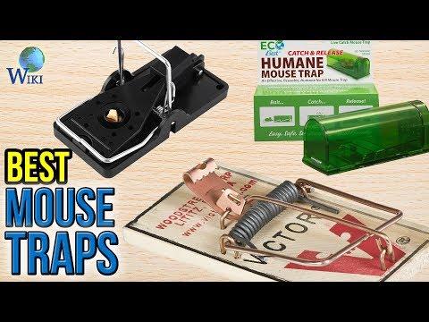9 Best Mouse Traps 2017