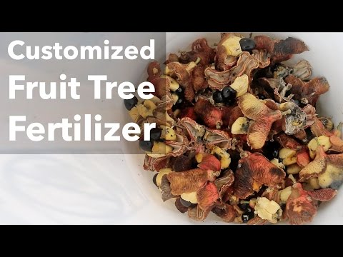 Customized Fruit Tree Fertilizer: Ackee Edition