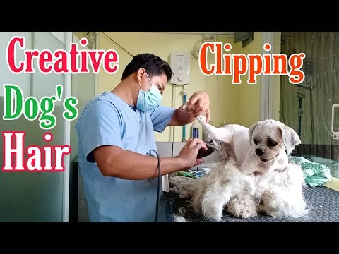 CREATIVE CLIPPING DOG HAIR | SHAVE || SHIH TZU | GROOMER STYLE