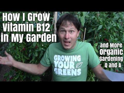 How I Grow Vitamin B12 in My Garden & More Organic Gardening Q&A