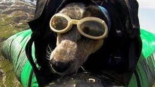 Increibles perros paracaidistas
