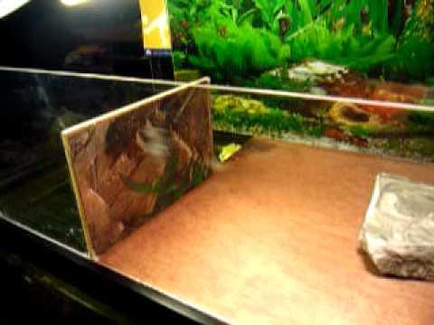 RES Red Eared Slider turtle Aquarium Basking Area Habitat - DONE ...