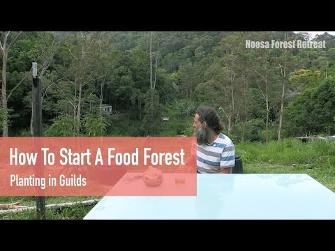 How to start a Food Forest: Planting in Guilds - Permaculture Design Course Residential & Online
