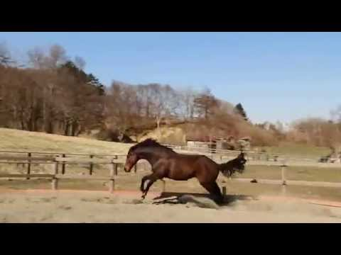 暴走劇場 - Horse crazy run and fart