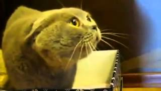 อยากรู้จังว่าแมวหง่าวตัวนี้กำลังพูดอะไร