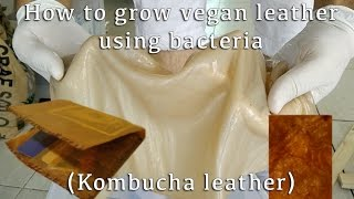 How to Grow Leather-Like Material Using Bacteria (Making Kombucha Leather)