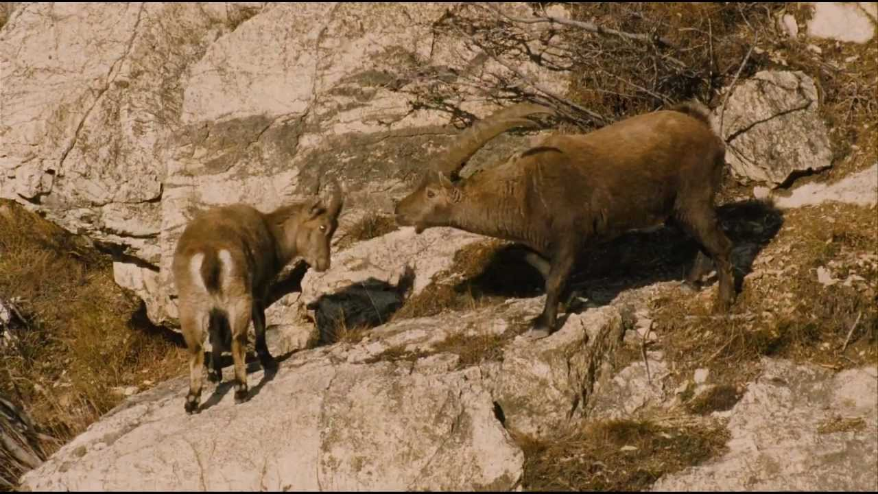 related pictures wild animals mating youtube