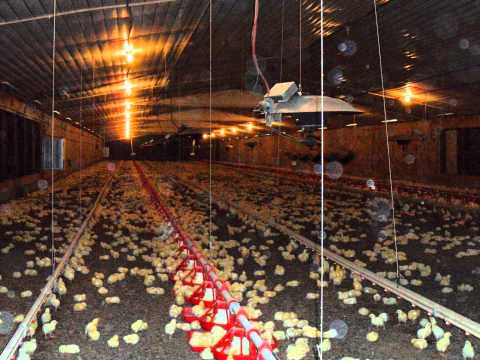 Poultry Farm For Sale In Mansfield, Arkansas - YouTube
