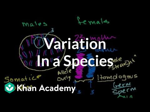 Variation in a Species