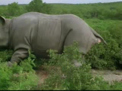 ace ventura rhino birth 2 youtube
