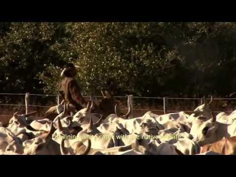 MELHORES IMAGENS DO PANTANAL BRASILEIRO MATO GROSSO DO SUL VIDEO PREMIADO HD