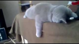 猫「私のことはほっといてください」