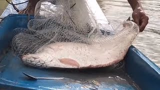 Cast Net Fishing INCREDIBLY Biggest Fish For World Record