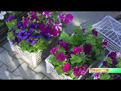 В Искитимском районе состоялся форум садоводов и цветоводов