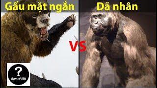 Gấu mặt ngắn Arctodus vs Dã nhân Gigantopithecus, con nào sẽ thắng #12 || Bạn Có Biết?