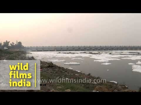 Chemical waste and other pollutants dumped in River Yamuna