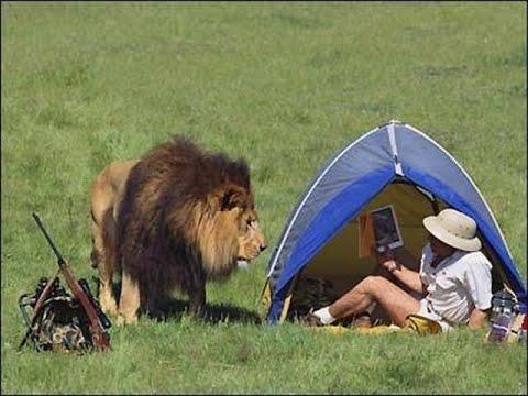 Смешные нападения животных на людей - Funny animal attacks on humans 20202