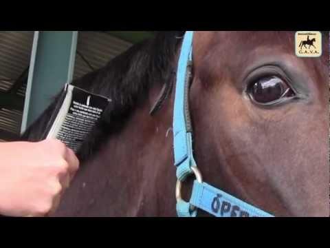 Cómo hacer trenzas de caballos a la holandesa-. CAVA-HORSE con Maria Roca